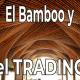 En que se parece un Trader Exitoso a un Bambú?